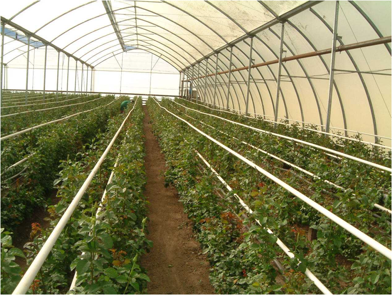 oseriangreenhouse
